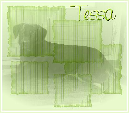 Tessa(1).jpg